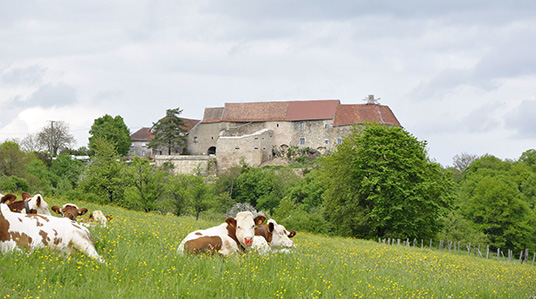 photo de Château de Montby